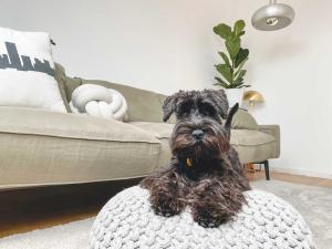 Demand soars for pet-friendly rental homes